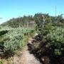 北横岳山頂往復、縞枯山周回