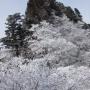 天井ヶ岳〜山上ヶ岳〜レンゲ辻〜稲村ヶ岳