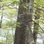 八丁山〜お伊勢山〜鷹ノ巣山〜榧ノ木山〜倉戸山