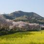日和田山〜高指山〜日和田山
