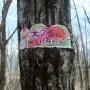 鳴沢梨の木平扇山百蔵山