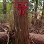 秋葉山885m 秋葉神社下社−秋葉神社上社−秋葉山山頂 往復