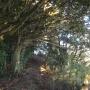 花の木公園ー南尾根ー栗坪