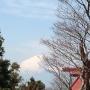 阿夫利神社から大山