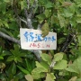 浅草岳(田子倉口ー浅草岳ー鬼が面山ー六十里越トンネル入口)
