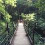 高尾山(6号路から3号路)
