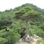 槇尾山(滝畑ダムから周回)